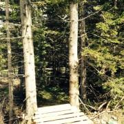 schoeckl-trail-area-downhill-graz-freeride-singletrail-3