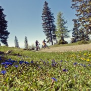 schoeckl-trail-area-enduro-freeride-mountainbike-bike-blumenwiese-alm-steiermark
